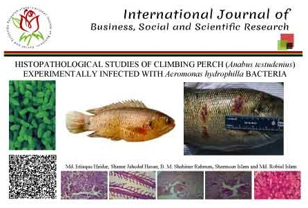 HISTOPATHOLOGICAL STUDIES OF CLIMBING PERCH (<i>Anabus testudenius</i>) EXPERIMENTALLY INFECTED WITH <i>Aeromonas hydrophilla</i> BACTERIA